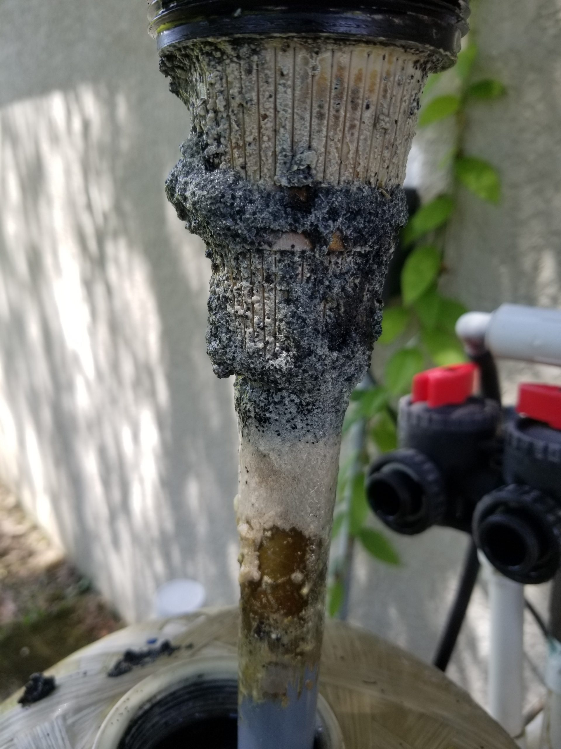 Bacterial buildup on a water system filter