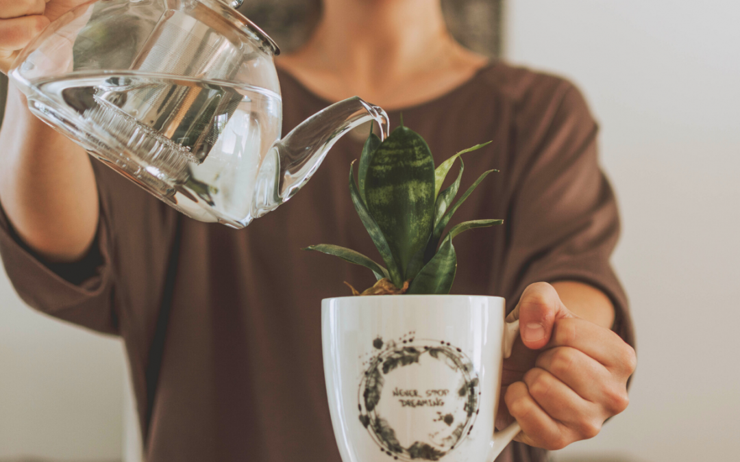 What Type of Water is Best for Your House Plants?