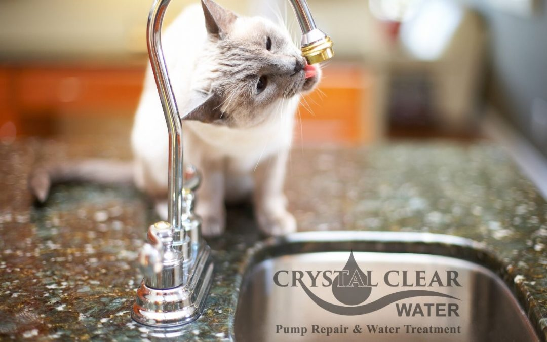 How Your Water Quality Affects Your Pets
